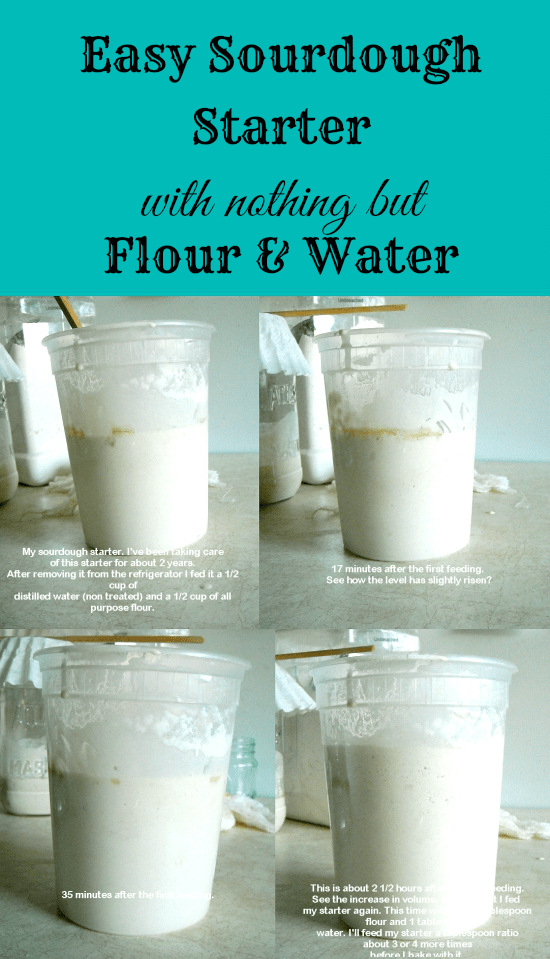 Step by step photos and instructions on how to make sourdough starter with nothing but flour and water