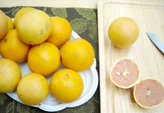 Florida Citrus Recipes, Back Yard Oranges, Marmalade, Canning,